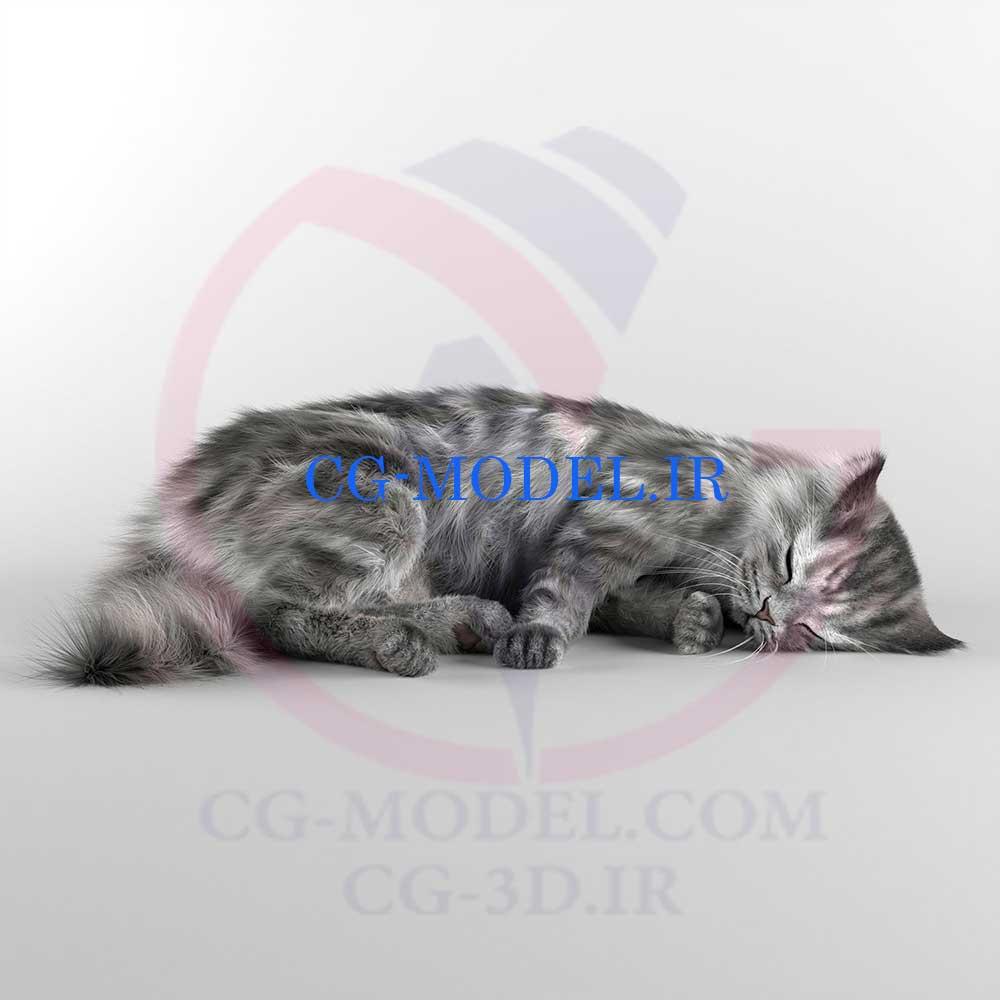دانلود مدل سه بعدی گربه