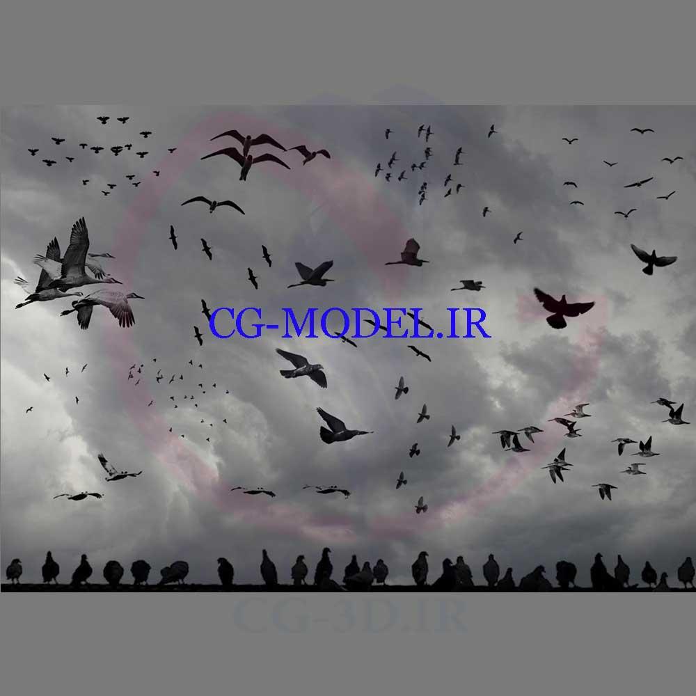 دانلود براش پرندگان برای فتوشاپ