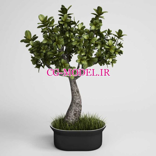 دانلود CGAxis Vol 01 گل و گیاه و درختچه