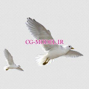 دانلود PNG پرندگان (2)