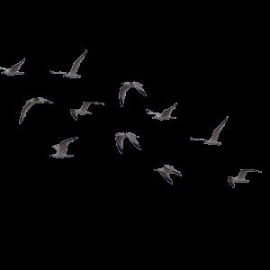 PNG پرندگان