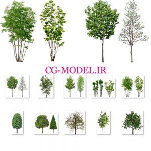 دانلود PNG درخت