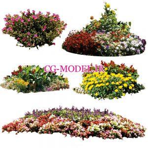 5 عدد PNG بوته گل