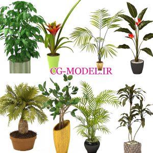 8 عدد PNG گلدان گیاه
