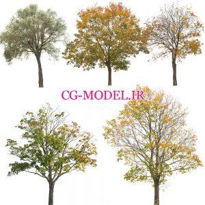 5 عدد PNG درخت