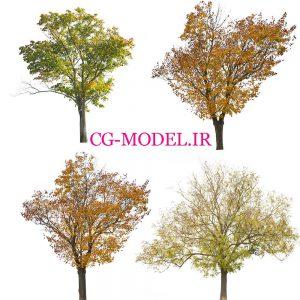 4 عدد PNG درخت پائیزی
