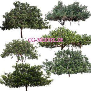 مجموعه تصاویر PNG درخت