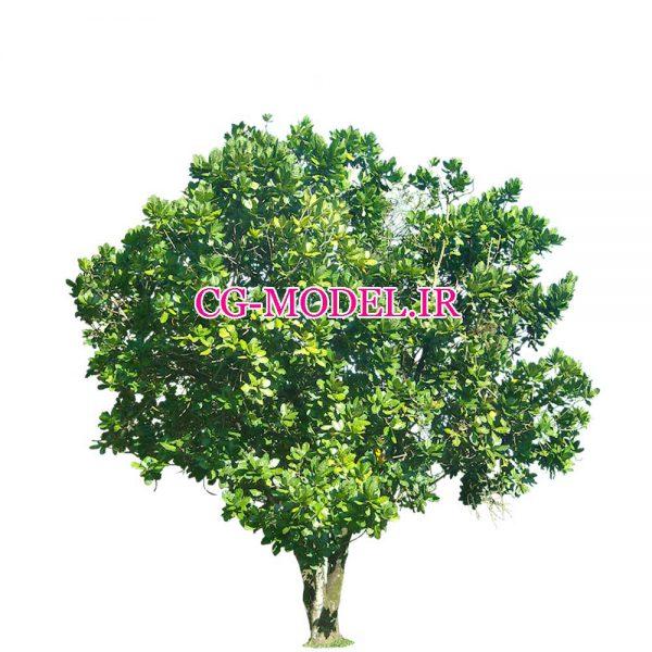 کات اوت درخت (13)