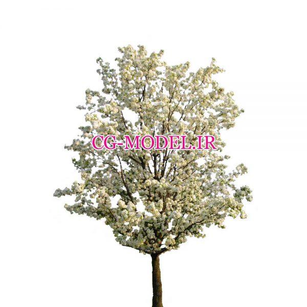 کات اوت درخت (11)