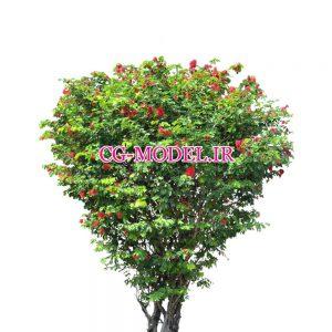 کات اوت درخت (12)