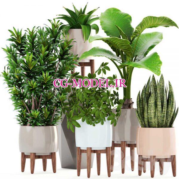 مدل سه بعدی انواع گیاه